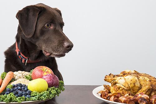 Pes vegetarián či dokonca vegán?