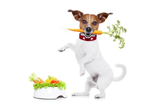 pes, vegan